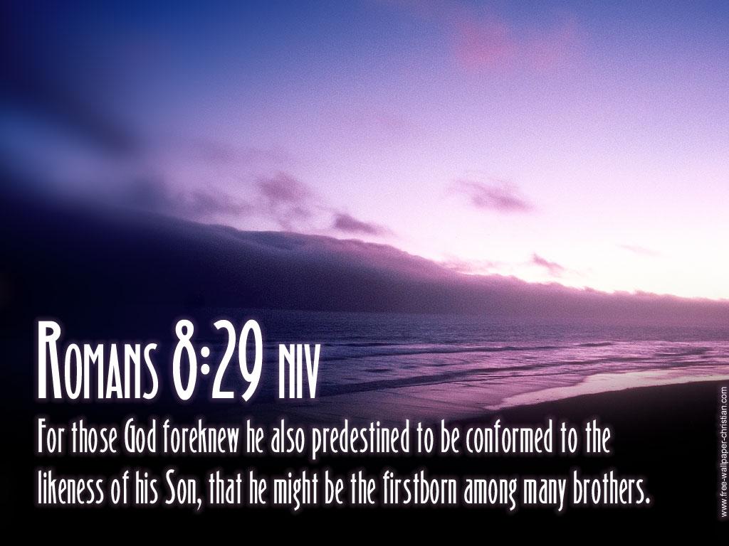 predestined에 대한 이미지 검색결과