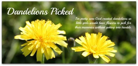 dandelions 8