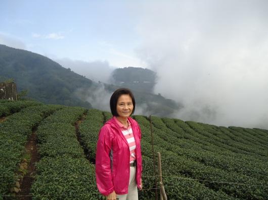 Tea bushes on mountain side.