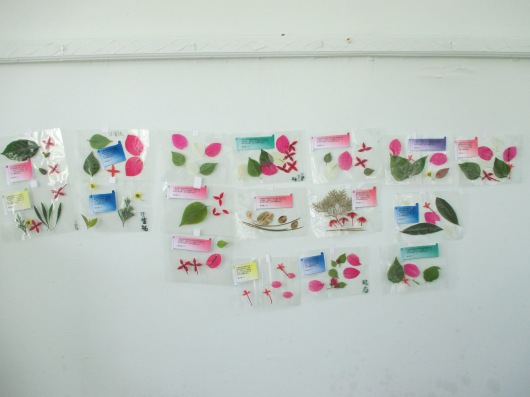 Laminated flowers and leaves artwork. The kids loved them!