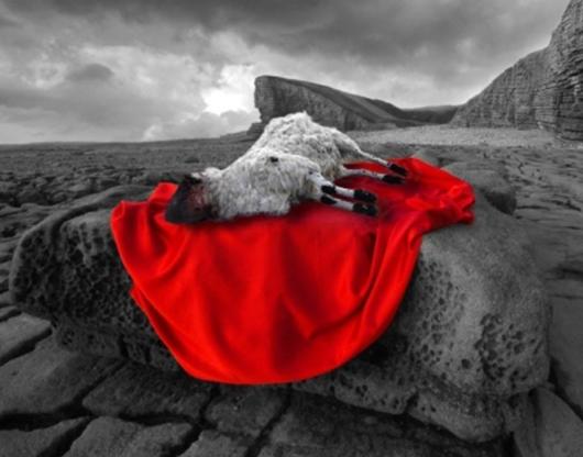 sacrificial lamb 3