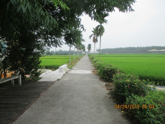 "Country road at back of ""home stay""."